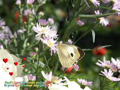 Love Butterfly Card