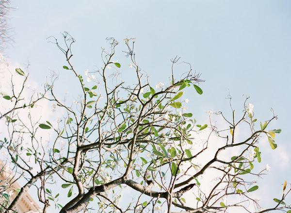 ThailandNov2011blog20.jpg