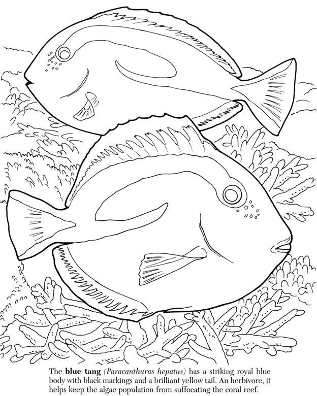 Coral Reef Fish Drawing at GetDrawings | Free download
