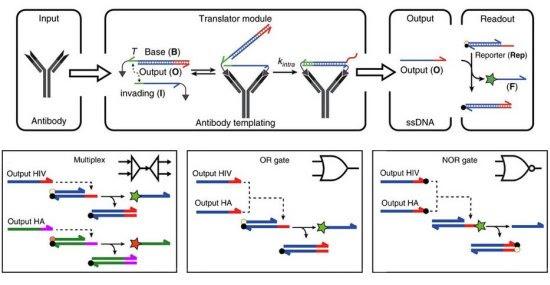 Computador de DNA já consegue identificar doenças