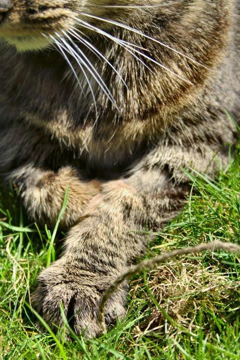 Mrs Pod's paws