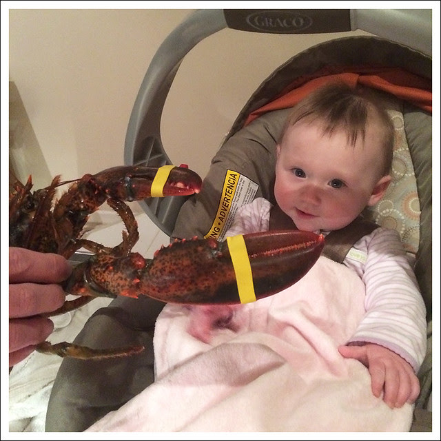 Madeleine and Lobster 1