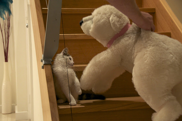 Teddy 08