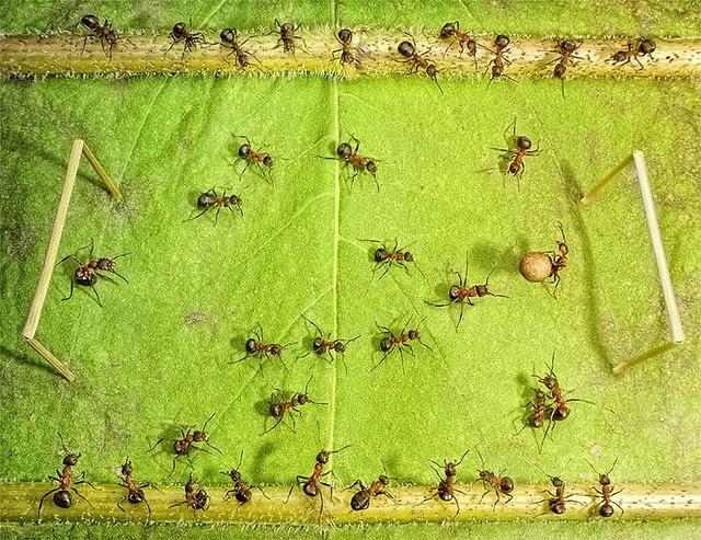 pavlov ants 04