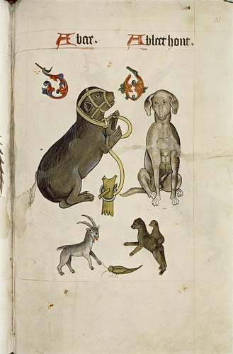 Bear and Bloodhound, Goat, green insect, apes