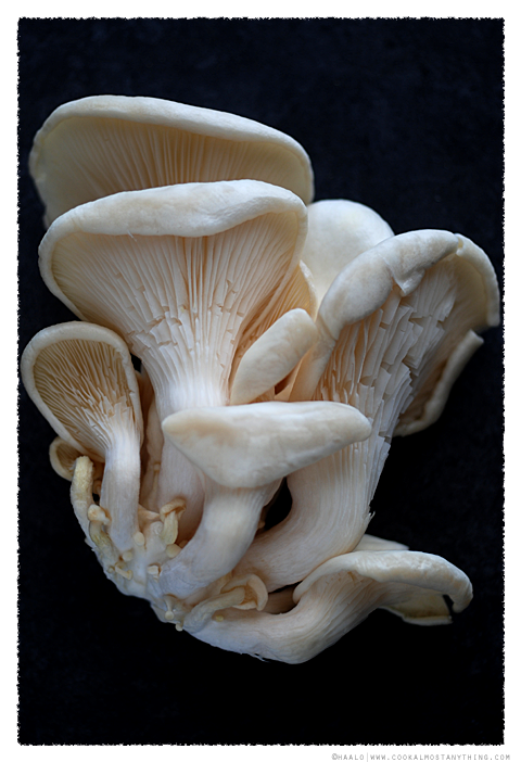 oyster mushrooms© by Haalo