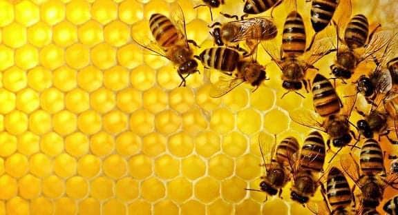 Resultado de imagem para imagens de abelhas