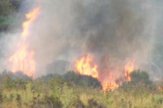 Hacer fuego estará prohibido en toda la región hasta el 31 de octubre.