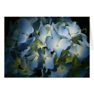 Hydrangea In Shadows Blue Floral Flowers Photo Greeting Cards