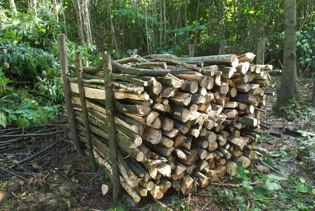 DSC_7096 logs in the woods