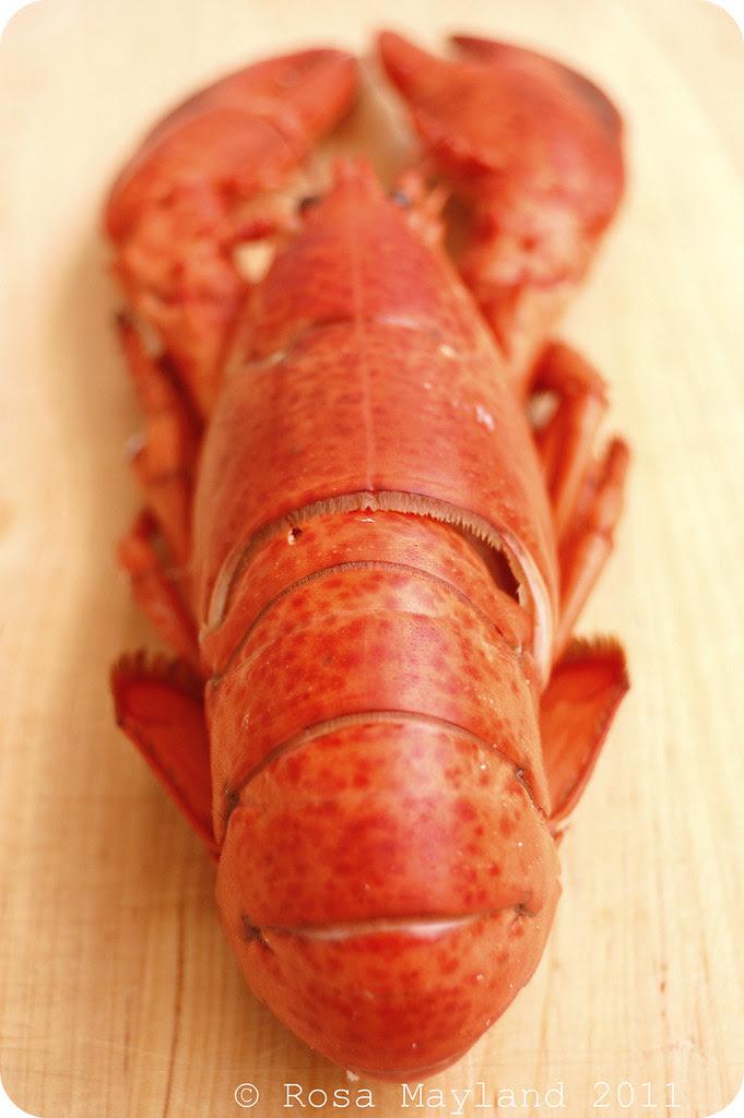 Lobster 6.1 bis
