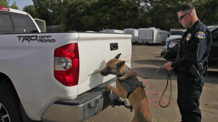 Drug sniffing dog