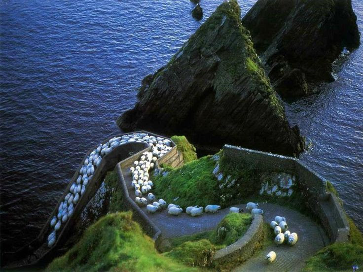 Sheep Highway, Ireland                                                              Most Beautiful                                                            Pages