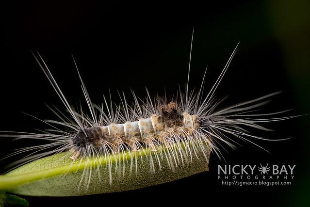 Caterpillar - DSC_7878