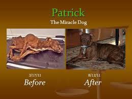 Patrick the Miracle Dog