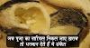पूजा का नारियल खराब निकलना अशुभ नही, भगवान का दिया संकेत है.. जानिए इसका विशेष अभिप्राय