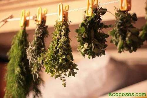 500x333xdrying herbs.jpg.pagespeed.ic .mhRL4DZrXZ 10 formas de preservar tus hierbas