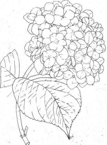 アジサイ 塗り絵素材 6月の花のぬりえ塗り絵イラスト素材画像集