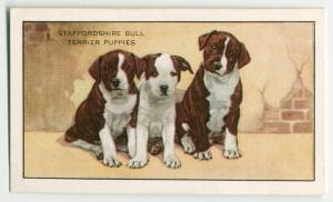 The Staffordshire Bull Terrier... Digital ID: 1520573. New York Public Library