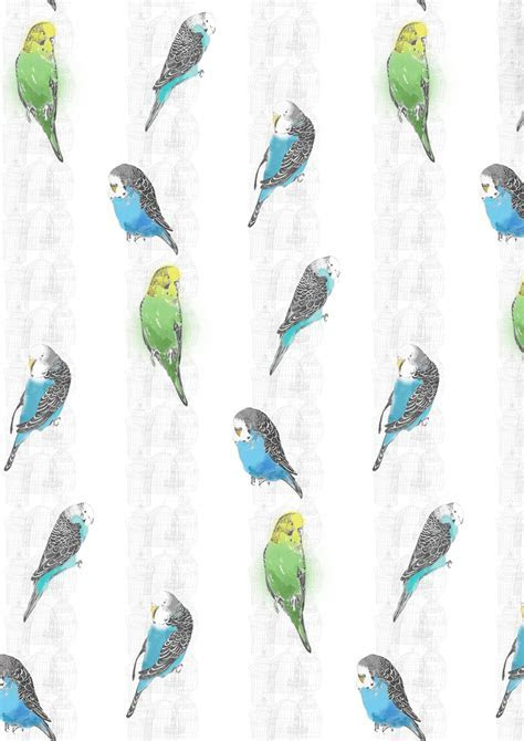 Rachel Morris   Pattern