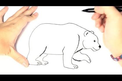 Dibujo Oso Polar Para Ninos