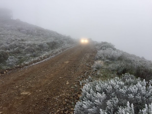 Vegetação amanheceu congelada nesta quinta (28) em Urupema (Foto: Jean Souza/RBS TV)