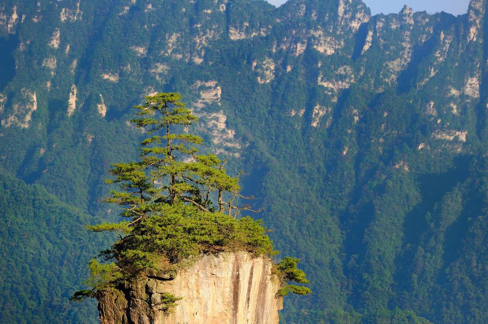 Унікальна скеля з ялинками