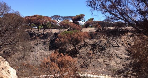 Monte quemando en la inmediaciones del parque nacional de Doñana. V.J