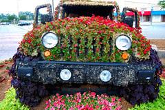 Festival Of Flowers