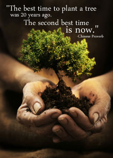 The Best Time To Plant A Tree Chinese Proverb 372x519 Quotesporn
