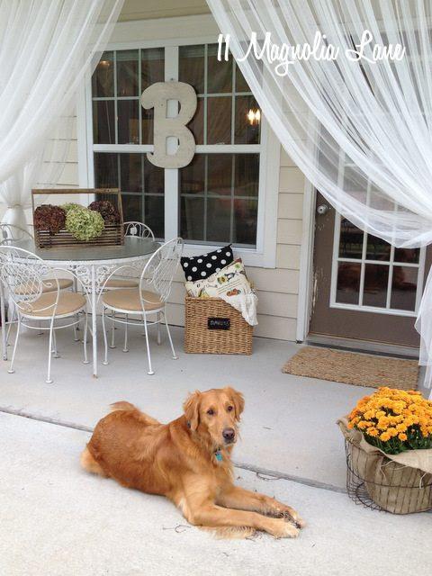 dog on back porch