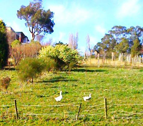 phone 151 geese field