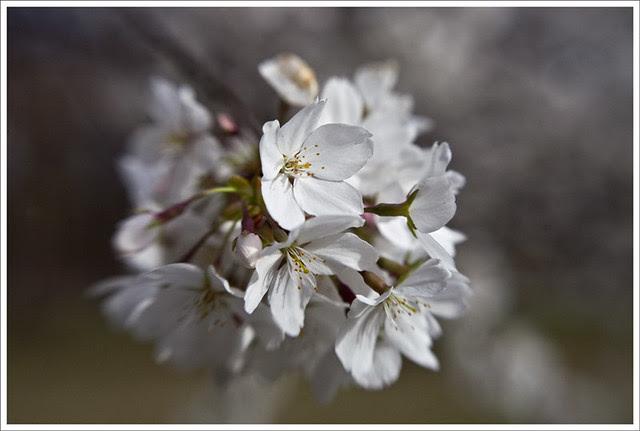 Tower Grove Park 2011-04-02 3