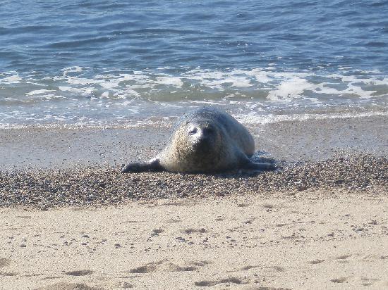Moss Beach, CA: Harbor Seal @ Fitzgerald Marien Reserve