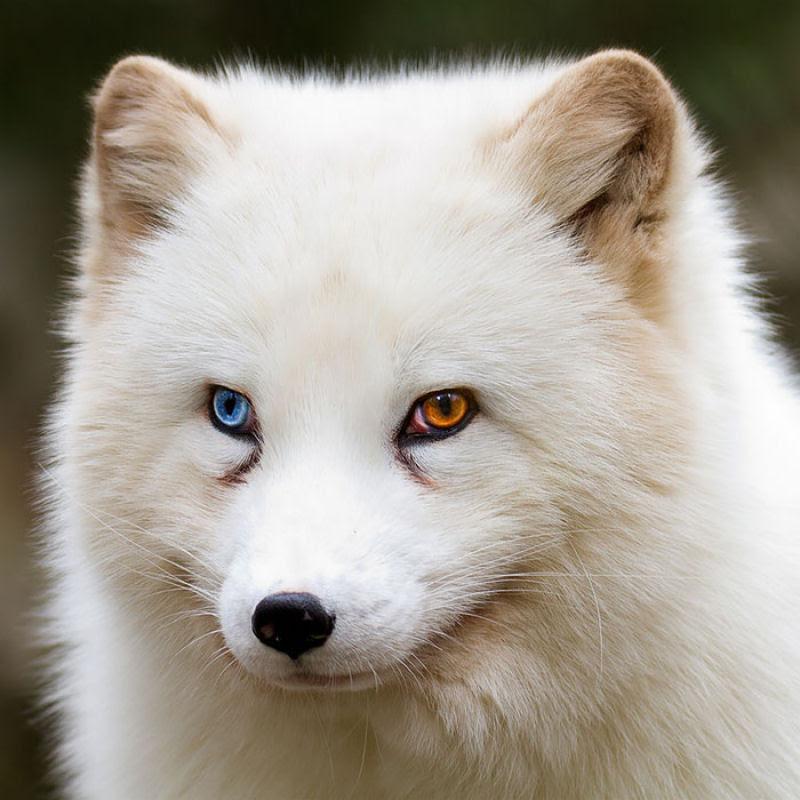 20 animais extraordinariamente belos com olhos ímpares 03