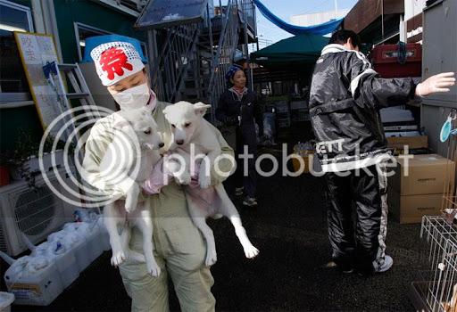 cães de fukushima