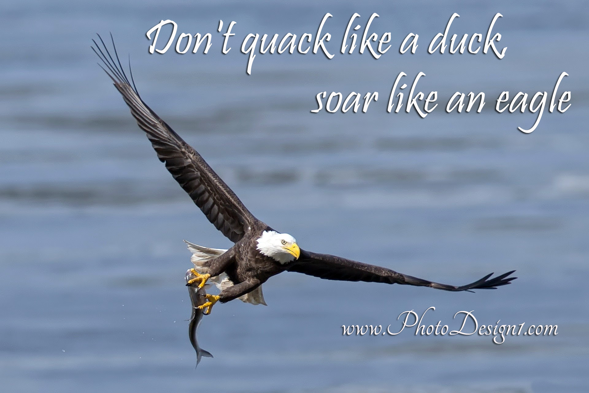 Eagle Quotes Sayings Animal Quotes Sayings