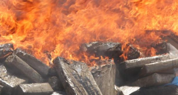 Tanger: destruction de plus de 10 tonnes de chira
