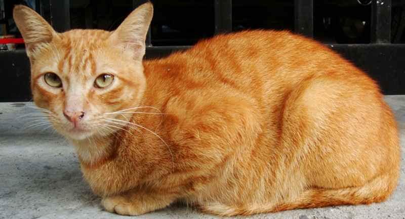 Unduh 89+  Gambar Kucing Cacingan Paling Imut