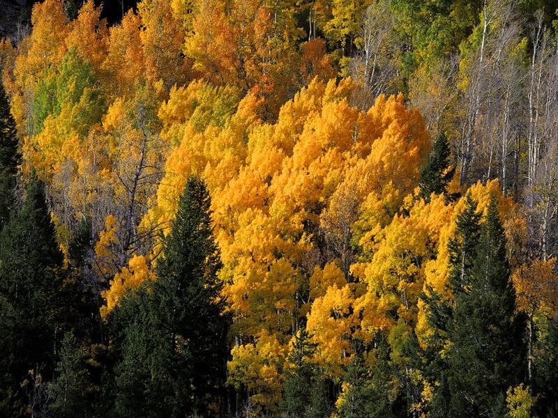 Chalk Creek, Sawatch Range, Colorado