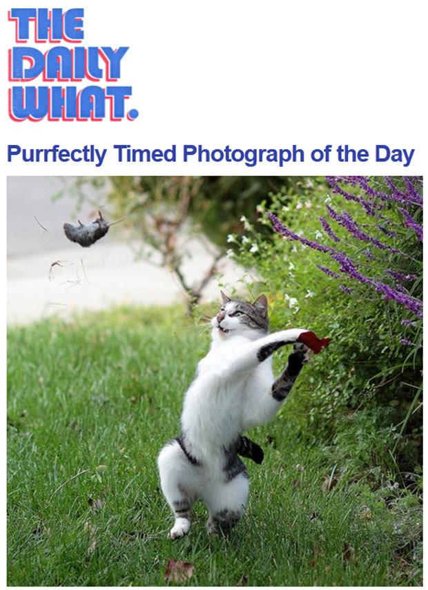 Gato é flagrado arremessando sua 'caça' no quintal de casa (Foto: Reprodução/The Daily What)