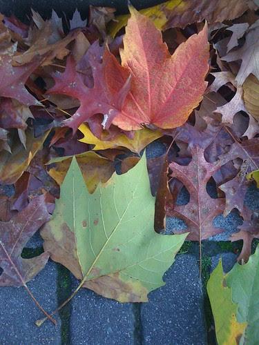 Fallen Leaves by Ayala Moriel