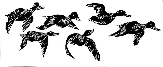 duck graphic BW