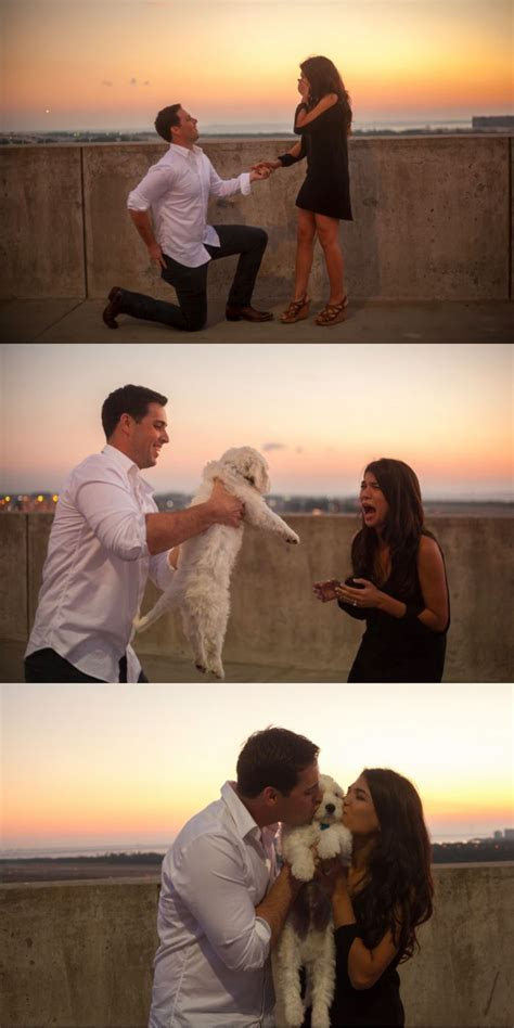 Best 20  Puppy proposal ideas on Pinterest