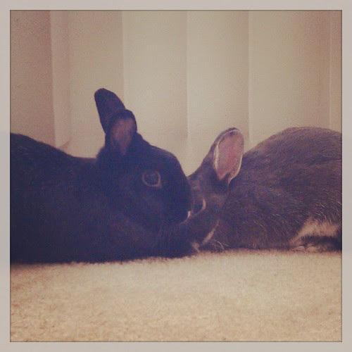 Bunnies In Luv