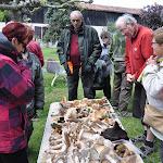 Les sorties de la Société Gersoise de Mycologie
