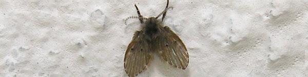 capa_mosquitowc