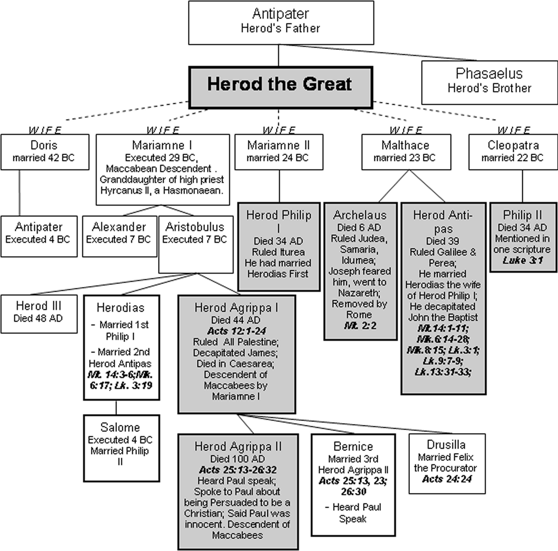 Risultati immagini per genealogical tree of herodian