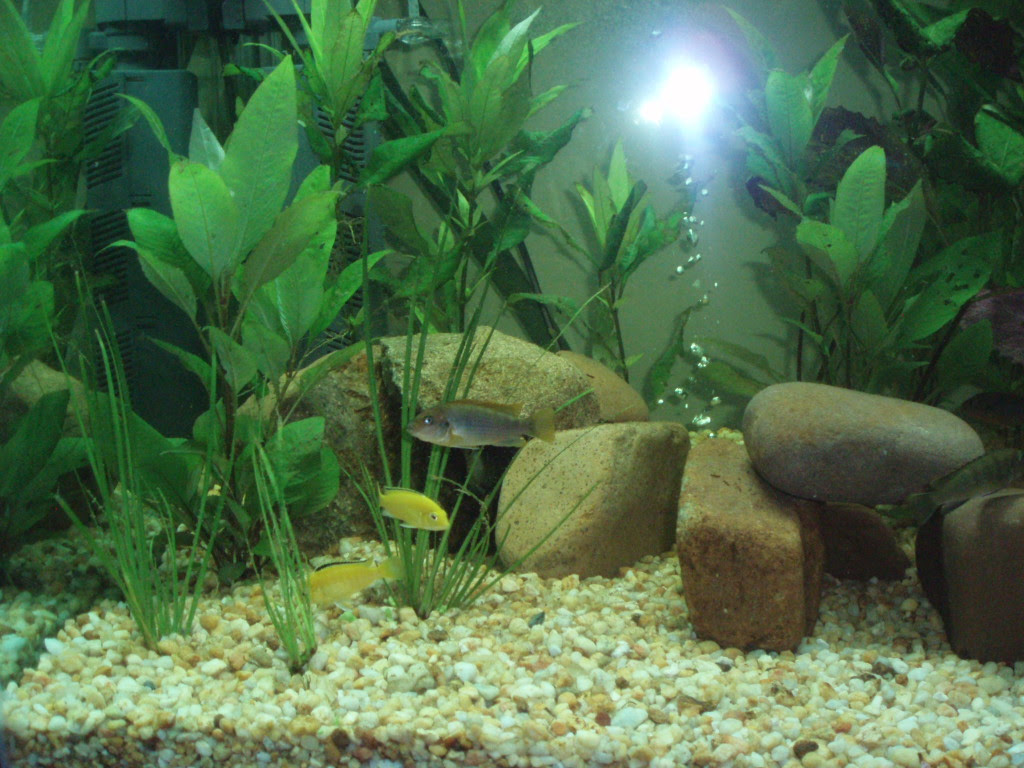 Decorating a Fish Tank | I am Mani - Life is precious - Don't waste it