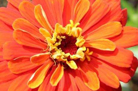 Orange Closeup sized